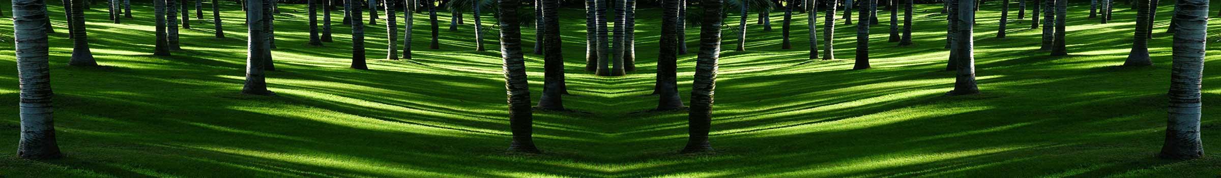 meadow-406514_1920__1200x350